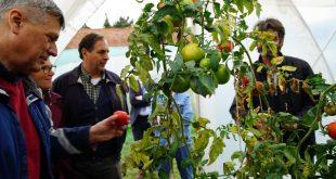 Ambasadori Kosnett: Shndërrimi i bimëve të egra në vajra esenciale është një proces i ngadaltë dhe i ndërlikuar