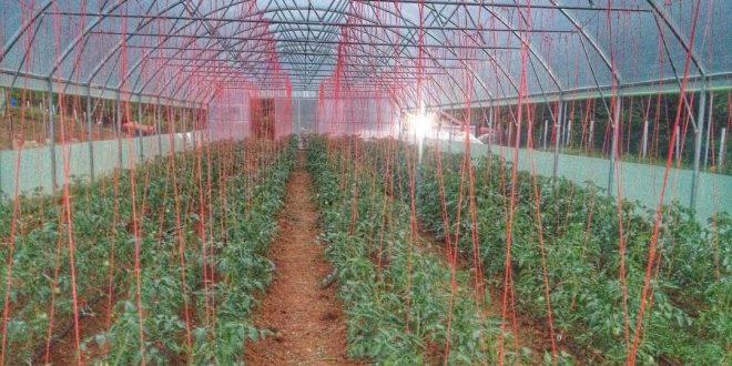 Qeveria e Kosovës ndanë mbi 1.8 milionë euro për kompensimin e bujqve nga fatkeqësitë elementare natyrore