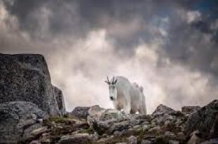 WWF: Raporti mbi Gjendjen e Planetiti WWF-së zbulon rënien me mesatarisht dy të tretat të popullatave të botës së egër që nga viti 1970