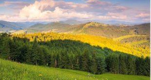 APK u bënë thirrje për të gjithë qytetarët e Kosovës që t'i mbrojnë pyjet nga zjarret në gjithë vendin