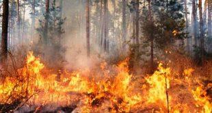 Ministria e Bujqësisë apelon të gjithë qytetarët dhe në veçanti fermerët që të mos i djegin arat pas korrjes së grurit